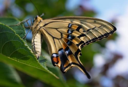 アゲハ蝶 スピリチュアル 意味