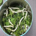 食用昆虫の蚕は栄養が豊富!?味はどんな味なの!?